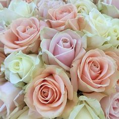Soft pink Sweet Avalanche, salmon-coloured Peral Avalanche and white Avalanche by Meijer Roses.