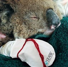 THE IMPACT OF BUSHFIRES ON FAUNA. Learn more about how to help injured wildlife. Talk to the students about how we can get the community involved in our environment.