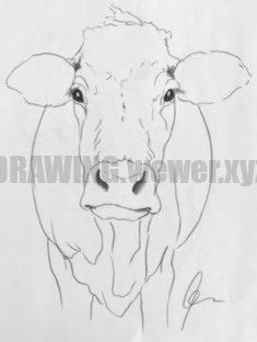Image result for step by step cow drawing face #drawing #image #result How to Draw Cow Drawing Easy, Drawing Tips, Easy Drawings, Illustrators, Moose Art, Face, Animals, Instagram, Animales