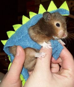Dinosaur costume for SYRIAN hamster.dwarf hamster need not apply lol