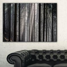 Sunbeams Peeking Through Dark Forest - Forest Wall Art
