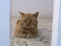 """That cute littlle guy was my best friend. He passed away on tried call him Garfield ,but it didn't work.His name was just """"Gatoulis""""(=cute little. My Best Friend, Best Friends, Film School, Cats, Videos, Youtube, Greece, Animals, Beat Friends"""