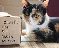 10 Terrific Tips for Moving Your Cat to a New Home! Repinned by www.movinghelpcenter.com Follow us on Facebook!