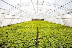 進化する農業〜ICT駆使したスマートアグリが、アベノミクス成長戦略のカギとなるか   ビジネスジャーナル