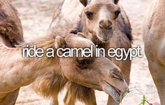 Maybe not in egypt due to the crisis but I want to ride a camel