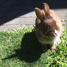 "Previous pinner: ""Lord Carrot, the little darling, intrigued by faux grass on the lawn!"""
