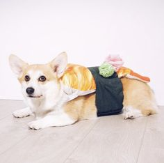 It's puppy sushi! Grab your chopsticks and pick up this cute pup! Check out all these totally adorable pets in foodie costumes.