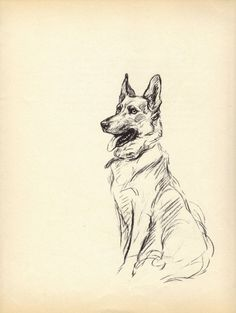 GERMAN SHEPHERD 1930s Vintage Dog Book Print Lucy Dawson Vintage Illustration to Frame  Book plate black & white German SHepherd