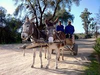 donkey cart :) Donkeys, South Africa, Cart, Horses, Urban, Projects, Animals, Covered Wagon, Log Projects