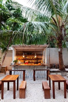 Palms in planters on the terrace or on the beach - soften the view...