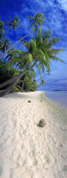 Coconut Beach | Dominican Republic