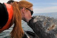 """""""I kissed a whale, and I liked it: Woman's peck for friendly mammal"""" (The Sun). The UK's largest circulation newspaper's unique take on whale watching in Baja California..."""