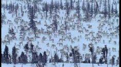 fact about reindeer videos for kids Christmas Activities, Christmas Ideas, First Grade Science, Reindeer Games, Animal Habitats, Kindergarten Class, School Holidays, Kids Songs, School Ideas