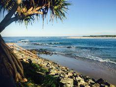 Pandanus Tree Against Kings Beach Caloundra