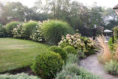 dramatic hedge of Miscanthus gracilimus and PG Hydrangea, with a touch of Calamgrostis to caress your arm as you pass through the gate.