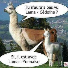 Tu n'aurais pas vu Lama - Cédoine? Jokes Quotes, Memes, Orlando Magic, Tour Eiffel, Breaking Bad, Funny Moments, Funny Animals, Haha, Funny Pictures