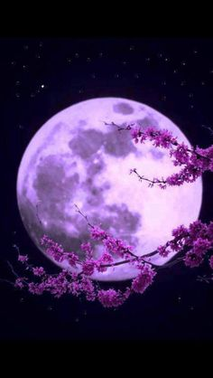 Best collection of most beautiful Moon pictures amazing photographs. These stunning moon photos are best to use as wallpapers or your cover photos. Purple Love, All Things Purple, Purple Rain, Purple Stuff, Ciel Nocturne, Shoot The Moon, Purple Aesthetic, Galaxy Wallpaper, Purple Wallpaper