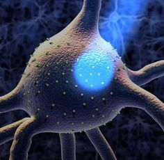NUTRICIÓN PARA LA LONGEVIDAD CEREBRAL -  Recordemos que el Cortisol, liberado por el estrés produce 3 efectos negativos principales: Interrumpe la provisión de la única fuente de combustible para el cerebro, la glucosa. 2. Obstaculiza la actividad de los neurotransmisores. 3. Provoca la muerte de las neuronas al formar moléculas de rad...