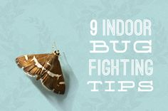 Use household items to keep pests away! Here are some quick, toxin-free ways to keep bugs out of your home: Shoo Fly! Get Rid of Bugs in Your Home