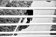 Behind the Lines - A man walks alone on a sunny day. His body casts a shadow. The walker is photographed from above by a bridge railing. Black white street photography.