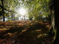 The most pessimistic climate change scientist has had a sudden change of heart Archaeology News, New Forest, Nature Reserve, The Guardian, Natural World, Climate Change, Britain, Woodland, National Parks