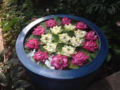 Lotus Flowers, Jim Thompson house, Bangkok, Thailand