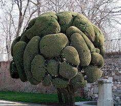 Crazy Tree   Crazy Tree