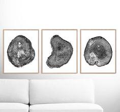 Tree Rings Print Set of 3 prints Black and White Tree Print Sailor Illustration, Black And White Tree, White Wood, Dorm Art, White Box Frame, Tree Rings, Large Wall Art, Watercolor Print, Wood Print