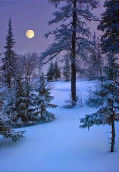 Beautiful Moon, Beautiful World, Beautiful Places, Beautiful Pictures, Beautiful Nature Scenes, Winter Szenen, Winter Magic, Winter Moon, Snow Scenes