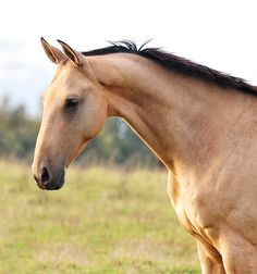 Mare from a horse farm in Russia