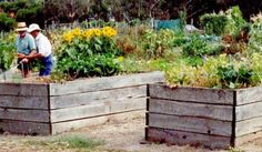 community gardens - Google Search