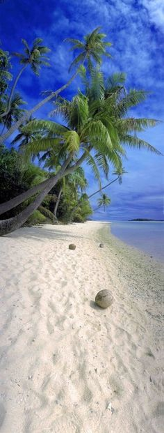 Blue sky, very white sugary sand beach, coconuts and palm trees...tropical bliss