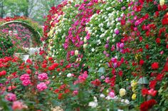 There is nothing better for the soul than strolling through a fragrant beautiful rose garden