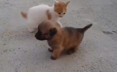 Puppy And Kitten Throwdown In The Most Adorable Street Fight Ever