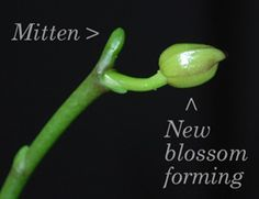 how to get orchids to bloom again... rather than just killing them like I usually do