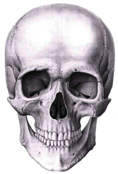 Pin by Drawings Art on Drawings Ideas (Drawing Art) in 2019 Skeleton Drawings, Skeleton Art, Skull Reference, Anatomy Reference, Anatomy Drawing, Anatomy Art, Drawing Drawing, Art Sketches, Art Drawings