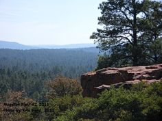 Mogollon Rim, AZ 2011....  I truly love the Rim, there are so many trees.
