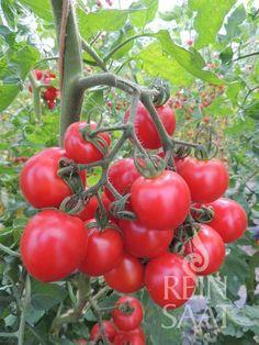 Vegetables, Garden, Decor, Garten, Decoration, Lawn And Garden, Vegetable Recipes, Gardens, Decorating