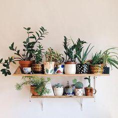 Indoor plant shelf | Home Design