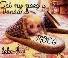 Image result for mooi nag prentjies Good Night Wishes, Good Night Sweet Dreams, Good Night Quotes, Good Morning Good Night, Viking Quotes, Good Knight, Goeie Nag, Afrikaans Quotes, Friend Pictures