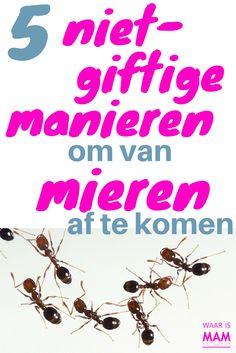 5 niet-giftige manieren om van mieren af te komen
