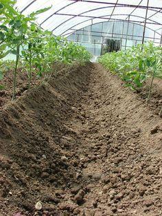 De facut si de nefacut in cultura de tomate | grAdinuca.ro Solar, Life, Gardening, Tomatoes, Diagram, Crafts, Design, Agriculture, Plant