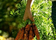 A Guide to Planning Your Vegetable Garden for Food Preservation