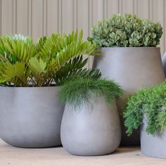 Outdoor Planters, Outdoor Gardens, Outdoor Potted Plants, Pot Plants, Balcony Garden, Garden Pots, Garden Ideas, Minimalist Garden, Plant Decor