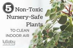 non-toxic nursery-safe plants to clean indoor air