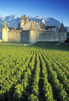 Vineyard in Geneva, Switzerland