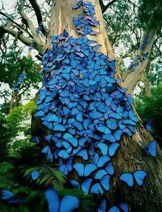 Just butterflies...