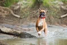 6 Tips for Photographing Dogs in Action