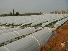 Advantages of plastic covers for low tunnel : 1- Protection of the shoot system against erosion factors caused by sands in sandy atmospheres . 2- Film protects growing of plants against different conditions of weather . 3- Increase there at of maturation of harvest with high quality product and high commercial value. 4- Decrease using the agricultural pesticides . 5- Decrease losing water to minimum rate comparison with uncovered agriculture. 6- It is characterized by simplicity application…