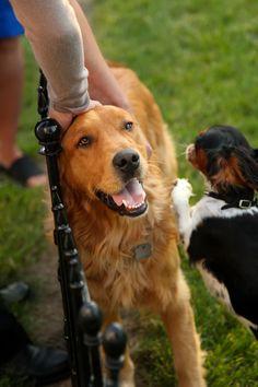 Colleen Mcdermott Dog Training